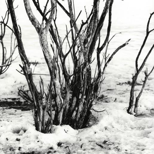 Kratt i snø