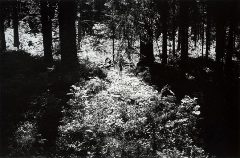 Skog/lys