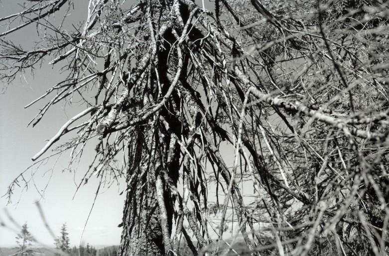 Tørt tre