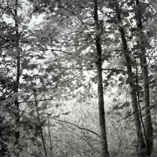 Trær/lys