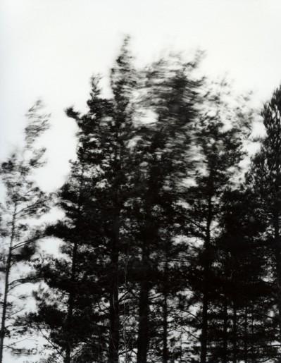 Trær/vind